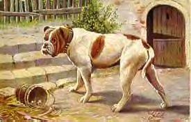 oldbulldog.jpg